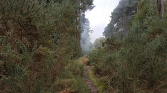 Gorse, nettles and now smoke as hazards!