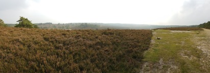 Very high up on Thursley Common - used in Skyfall